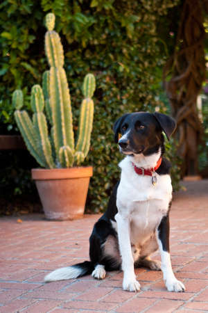 Domestic dog sitting on brick patio