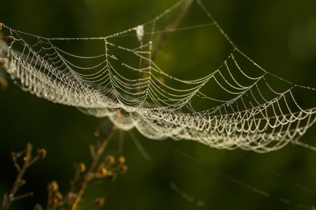 Spider web shaking on wind in forest Stock Photo