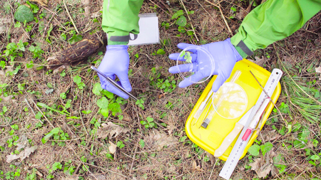 Scientist ecologist in the forest taking samples of plants Stock Photo