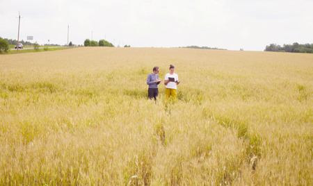 Two scientists ecologists in the wheat field