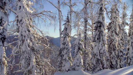 View of the winter forest in the Siberian mountains