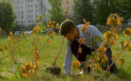 Ecological inspector cheking root system of the bush. Irresponsibility of park workers Reklamní fotografie
