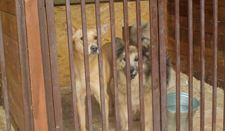 Two dogs in a dog's shelter waiting to volunteer. Volunteering and helping concept.