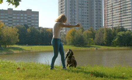 Woman playing with the dog in the park. Dog holding a piece of tissue in the teeth