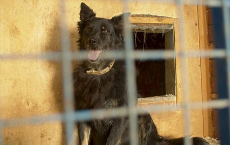 Black mongrel pensive dog in its cage at a animal shelter waiting to visitor