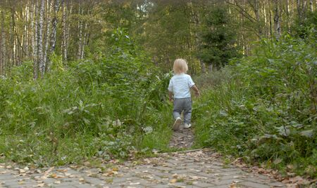 Little boy walking along the path in the forest. Baby on the stroll. Rear view