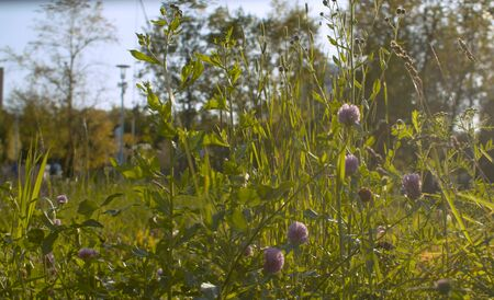 Grass in the city park Фото со стока