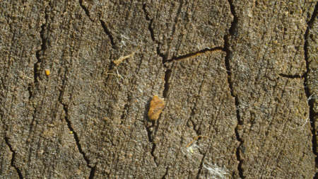 Close up view of old cracked wood cut. Macro shooting, camera slowly moving along the wood. Abstract textured background