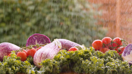 Close up fresh vegetables on the table under the rain. Harvesting in a country farm. Healthy fresh food concept Banque d'images
