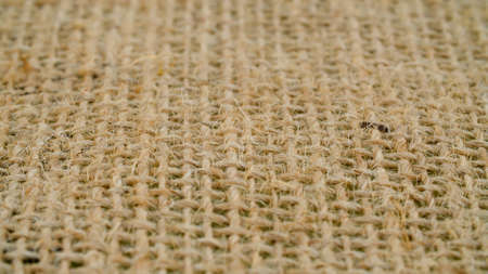 Extreme close up - coarse burlap of rare weave. . Texture, textile background. Macro shooting 写真素材