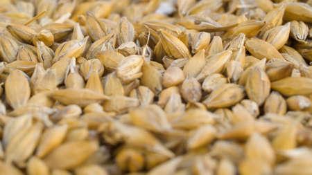 Ripe raw rye grains extreme close up. Grain harvest, farming. Macro shooting, camera slowly moving on slider 写真素材