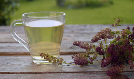 Close-up a transparent cup of thyme drink on the old wooden table outdoors. Fresh raw thyme on the table. Herbal medicine concept
