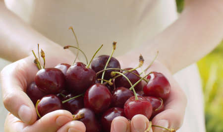 Close up ripe red cherry in female hands. Agriculture, gardening or ecology. Healthy fresh food concept 写真素材