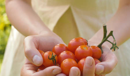 Close up female hands holding a ripe cherry tomatoes. Agriculture, gardening or ecology concept