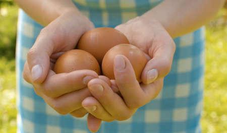 Close up fresh brown eggs in female hands. Rural life, harvesting