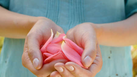 Close up beautiful pink rose petals in female hands. Country life, nature, gardening