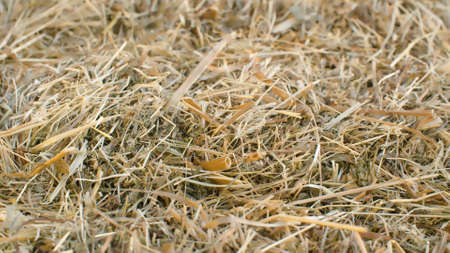 Close up fresh hay - natural background, texture 写真素材