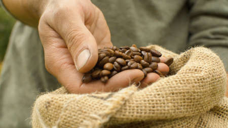 Close-up coffee beans in a burlap jute sack. Male hands pouring coffee beans
