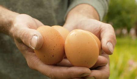 Close up fresh brown eggs in farmers hands. Rural life, harvesting 写真素材