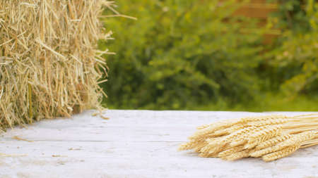 Close up ripe rye ears and fresh hay on wooden table outdoors. Raw cereals macro. Natural background