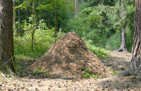 anthill: ant-hill Stock Photo