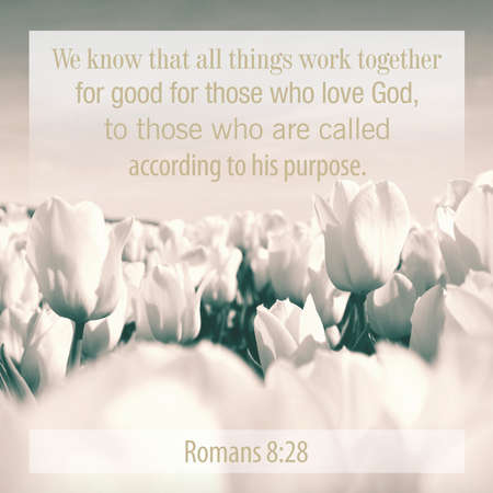 We know that all things work together for good for those who love God, to those who are called according to his purpose. Romans 8:28 Stock Photo