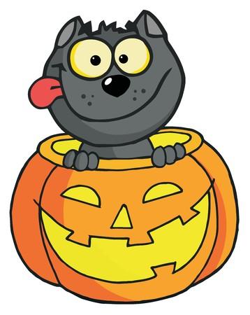 happy cat: Happy Cat In einen K�rbis