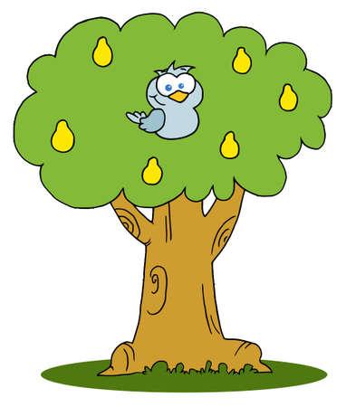 pera: Partridge amarillo en un árbol de pera