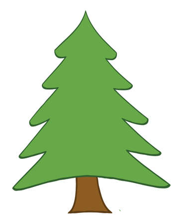 pine tree: Pine Tree Illustration