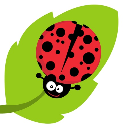 Cute Lady Bug On Leaf Vector