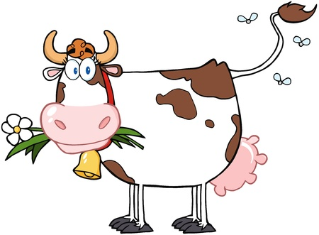 non    urban scene: Dairy Cow With Flower In Mouth