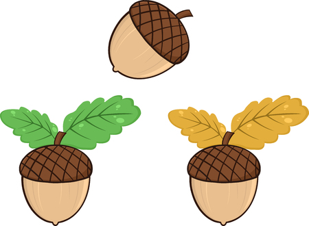 three leaf: Acorn With Oak Leaves Cartoon Graphic Illustrations. Collection Set