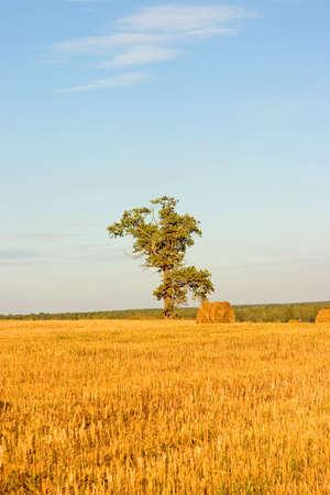 Hayrick, haystack photo