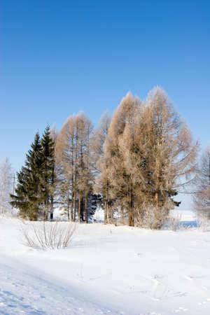 Frosten trees Stock Photo - 355748