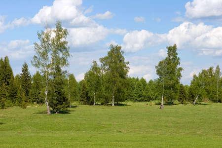 Summer landscape photo