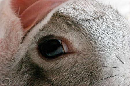 Close up grey rabbit head Stock Photo - 519164