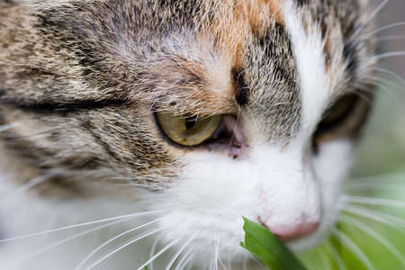 Ñat tasting grass close up portret