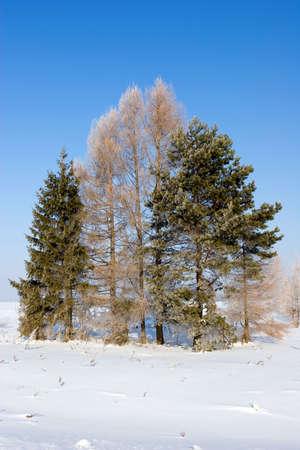 Frosten trees, Winter landscape Stock Photo - 596618