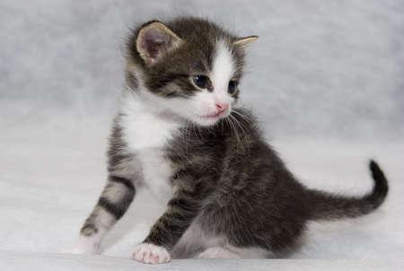 whiskar: Small kitten
