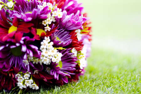 purple daisy flowers Stock Photo