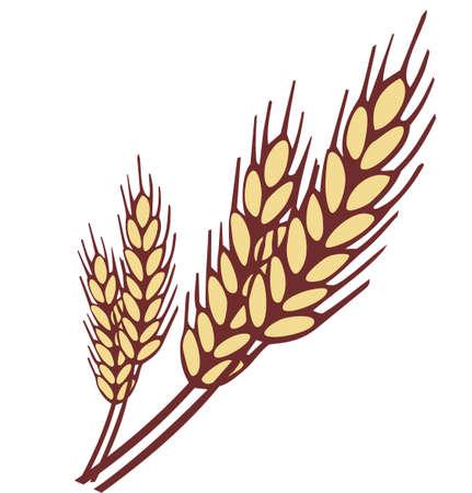 ječmen: Pšenice ucho Ilustrace
