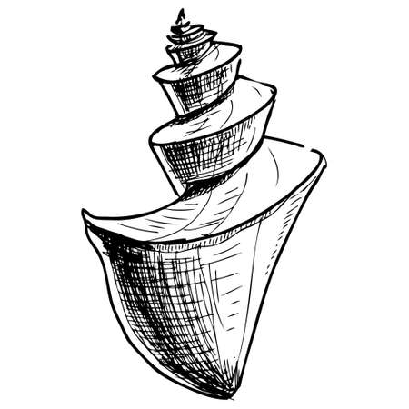 conch shell: Sea shell Illustration