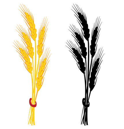 oat: Wheat ear vector illustration