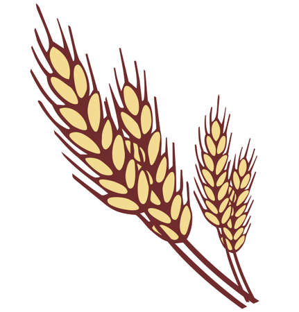 wheat illustration: Grano orecchio