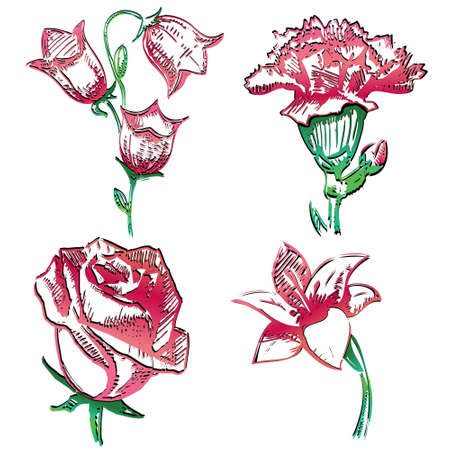 Collection of flowers Vector