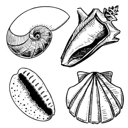 mollusk: Sea shells collection