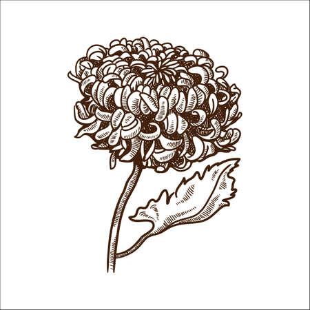 Hand drawn sketch. Eps 10 vector illustration. Vector