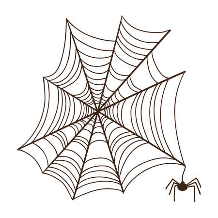 Spider web.  Illustration
