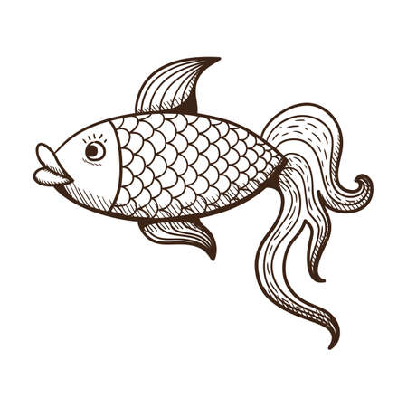 golden fish: Golden fish.