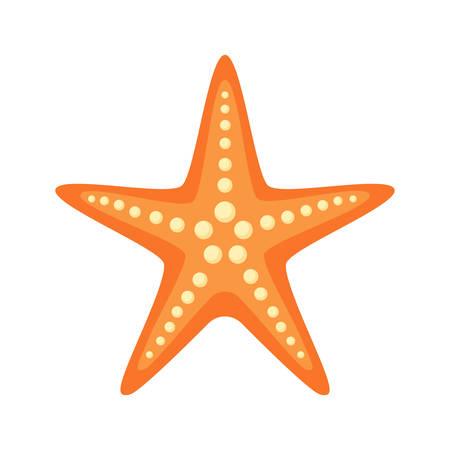 beach sea: Sea star.